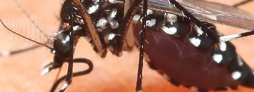Chikungunya, 8 cose dasapere